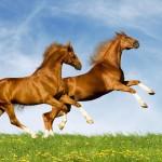 two-horses-1680x1050